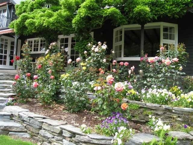 Roses in bloom at Trelawn Place Queenstown