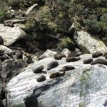 Seals on the rocks at Milford Sound